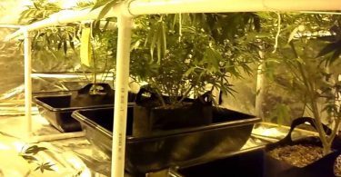Grow tent with LED lights