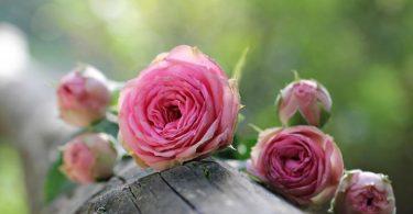 Flowers Symbolize